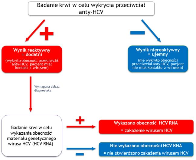 Schemat postępowania diagnostycznego w zakażeniach HCV . Opracowanie własne – zespół Projektu 5